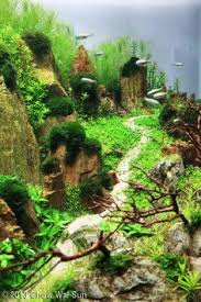 Planted Aquarium Aquascaping บอนไซญ ป น น าร ก Home U0026 Garden Pinterest Bonsai And Gardens