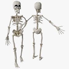 Halloween Skeleton Cartoon Popular Cartoon Skeleton Pictures Buy Cheap Cartoon Skeleton