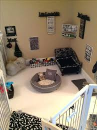 pet room ideas adorable living room ideas best puppy on dog rooms area and pet