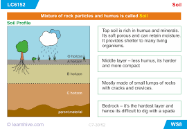 learnhive cbse grade 7 science soil lessons exercises and