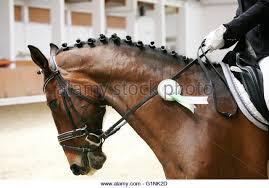 Horse Bridle Decorations Horse Bridle Decoration Stock Photos U0026 Horse Bridle Decoration
