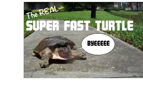 Arkansas what travels faster light or sound images Super fast turtle jpg