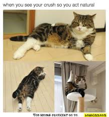 Sassy Cat Meme - 10 fresh single memes 1 when parents ask you why you re still single