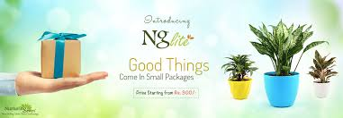 nurturing green buy 1000 plants online in india delhi ncr