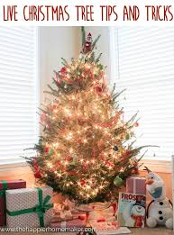live christmas tree tips u0026 tricks the happier homemaker