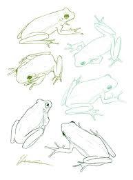 19 best froggies images on pinterest drawing ideas amphibians