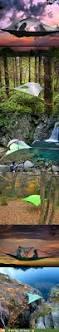 thanksgiving camping california best 20 tree camping ideas on pinterest alexa bliss snapchat