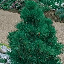 tree for backyard outdoor goods
