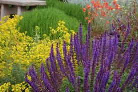 5 bright cheerful coastal garden flowers