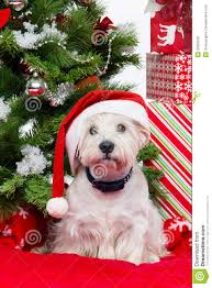 westie in christmas hat stock photo image of decoration 35820526