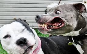 awsome aggressive dog breeds list dog breeds puppies aggressive