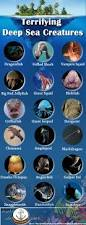 terrifying deep sea creatures visual ly