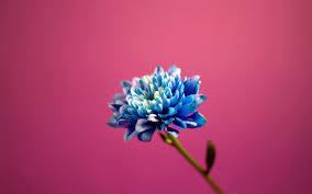 Pretty Blue Wallpapers by Blue Flower Wallpaper