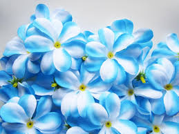 white and blue flowers soft white blue flowers wedding flowers blue flowers