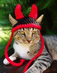 Halloween Costumes Small Dogs Cat Hat Costume Small Dog Hat Costume Devil Hat