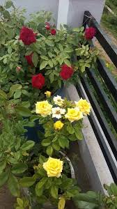 terrace gardening what are the problems faced in terrace gardening quora