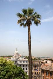 palm tree with buildings in rome royalty free stock photo