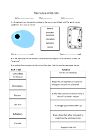 plant and animal cell worksheet by rosie1999 teaching resources
