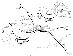 dark eyed slate colored junco birds coloring page free printable