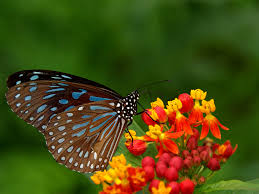 butterfly flowers butterfly gardening for children national garden bureau