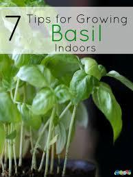 Indoor Vegetable Container Gardening - 37 best plants images on pinterest gardening plants and indoor