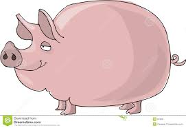 pig royalty free stock images image 61949