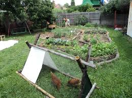 backyard story good life permaculture