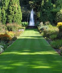 ornamental lawn seed without ryegrass thegrassseedstore co uk