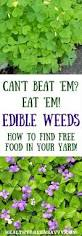 native edible plants 248 best foraging images on pinterest edible plants wild