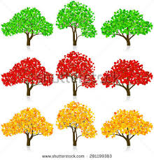 three trees stock images royalty free images vectors