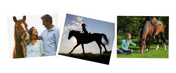 in light wellness systems in light equine systems in light wellness systems