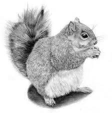 squirrel tattoo designs page 8 tattooimages biz