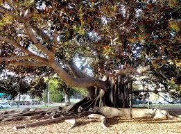 San Diego Botanical Garden Foundation Danger Garden San Diego S Balboa Park