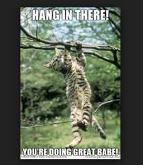 Hang In There Meme - 20 hang in there meme to motivate you sayingimages com