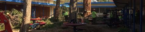 m s wesley tree service serving chico redding paradise m s