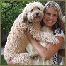 137 Best Poodle Mixes Images On Pinterest Poodle Mix Animals