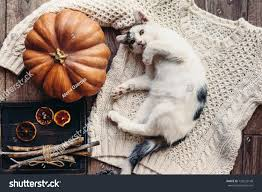 cat home decor cute kitten relaxing on warm sweater stock photo 728235148