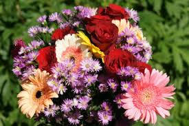 Pictures Of Beautiful Flowers In The World - beautiful philippines nature pictures