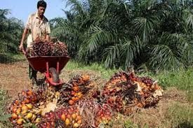 Minyak Kelapa Sawit Terkini minyak kelapa sawit indonesia laku keras di pakistan riau pembaruan