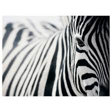 Black And White Zebra Bedrooms