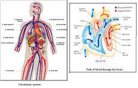 99 ideas respiratory system coloring page on gerardduchemann com