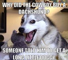 Pun Husky Meme - the best worst jokes from pun husky