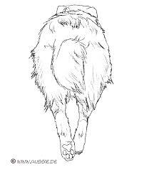 australian shepherd 2 nasen rassestandard australian shepherd aussie de