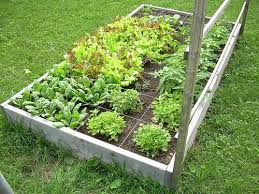 garden planning part 3 deciding when to plant your seeds