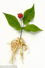 forget viagra a tablet made from ginseng could boost a man u0027s love