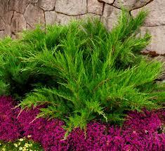 flower plants plants flowers calloway s nursery cornelius