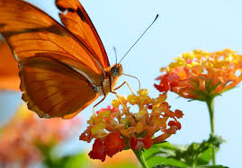 all events for butterfly kaleidoscope u2013 white river state park