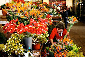 Madeira Flowers - how to do funchal in 48 hours