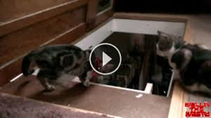 Go Down Stairs by Evil Cat Sees His Friend Trying To Go Down Stairs