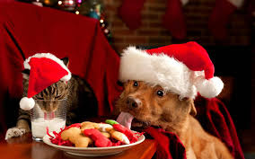 pet christmas one week until christmas the peaks pet nanny pet sitting dog